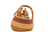 PUP 01 JE0018 01