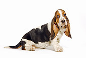 PUP 01 JE0019 01