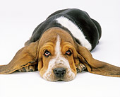 PUP 01 JE0023 01