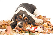 PUP 01 JE0027 01