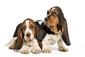 PUP 01 JE0033 01
