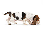 PUP 01 JE0039 01