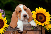 PUP 01 LS0005 01