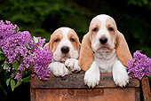 PUP 01 LS0007 01
