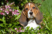 PUP 01 LS0008 01