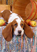 PUP 01 RC0001 01