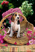 PUP 01 RC0002 01