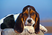 PUP 01 RK0030 03