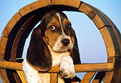 PUP 01 RK0031 08