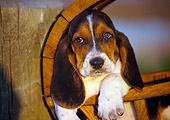 PUP 01 RK0032 06