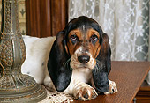 PUP 01 RK0041 01