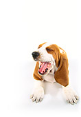 PUP 01 RK0052 24