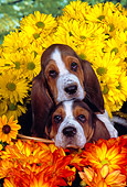 PUP 01 RK0053 13