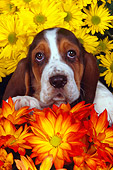 PUP 01 RK0054 14