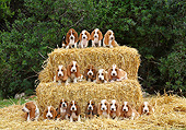 PUP 01 XA0003 01