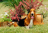 PUP 01 CE0003 01