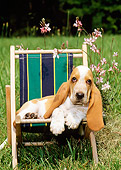 PUP 01 CE0006 01