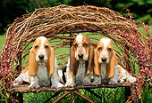 PUP 01 CE0008 01