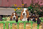 PUP 01 CE0012 01