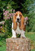 PUP 01 CE0015 01