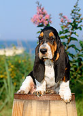 PUP 01 CE0017 01