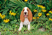 PUP 01 CE0021 01