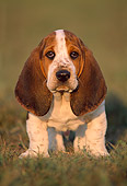 PUP 01 GR0010 01