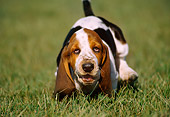 PUP 01 GR0012 04