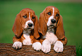 PUP 01 GR0013 01