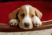 PUP 01 GR0029 01
