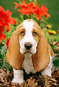 PUP 01 LS0001 01