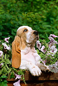 PUP 01 LS0002 01