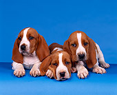 PUP 01 RK0004 02