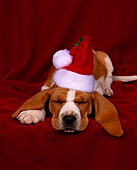 PUP 01 RK0007 01