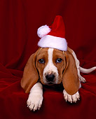 PUP 01 RK0008 01