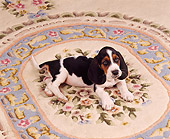 PUP 01 RK0012 01