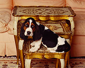 PUP 01 RK0018 03