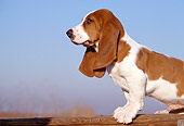 PUP 01 RK0027 03