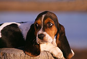 PUP 01 RK0030 01