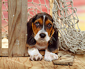 PUP 01 RK0038 04
