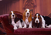 PUP 01 RK0043 07