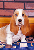 PUP 01 RK0046 06
