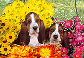 PUP 01 RK0053 06