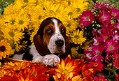 PUP 01 RK0054 05