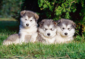 PUP 02 CB0001 01