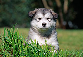 PUP 02 CB0002 01