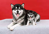 PUP 02 FA0001 01