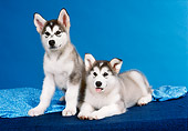 PUP 02 FA0002 01