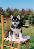 PUP 02 FA0005 01