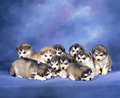 PUP 02 RK0004 05